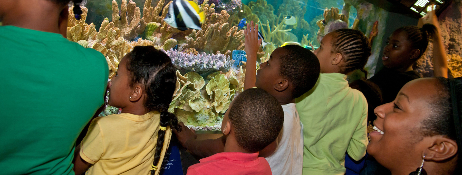 Visitors to the New England Aquarium watch tropical fish swimming through a Pacific Coral exhibit. (Photo: S. Cheng)