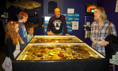 Tidepool at the Cape Cod Museum of Natural History. Photo by Teresa Izzo.