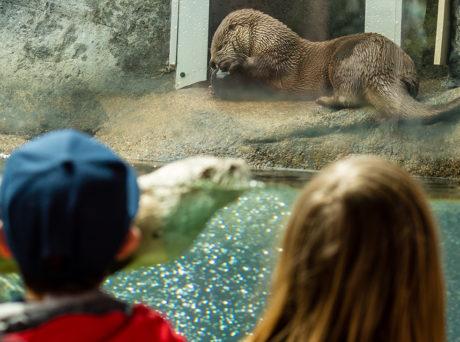 Children watching seals at the Ecotarium