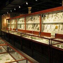 Harvard Museums