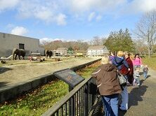 Outdoor view of the Buttonwood Zoo