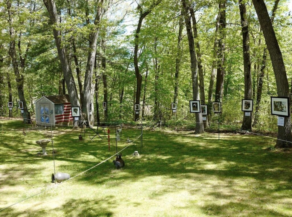 sunshime cuts through the trees in a grassy backyard where framed photos are hung in black frames from trees